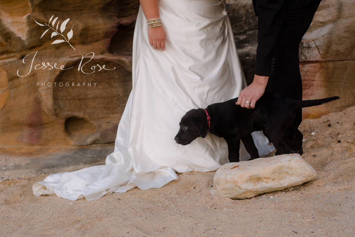 beach-wedding-puppy