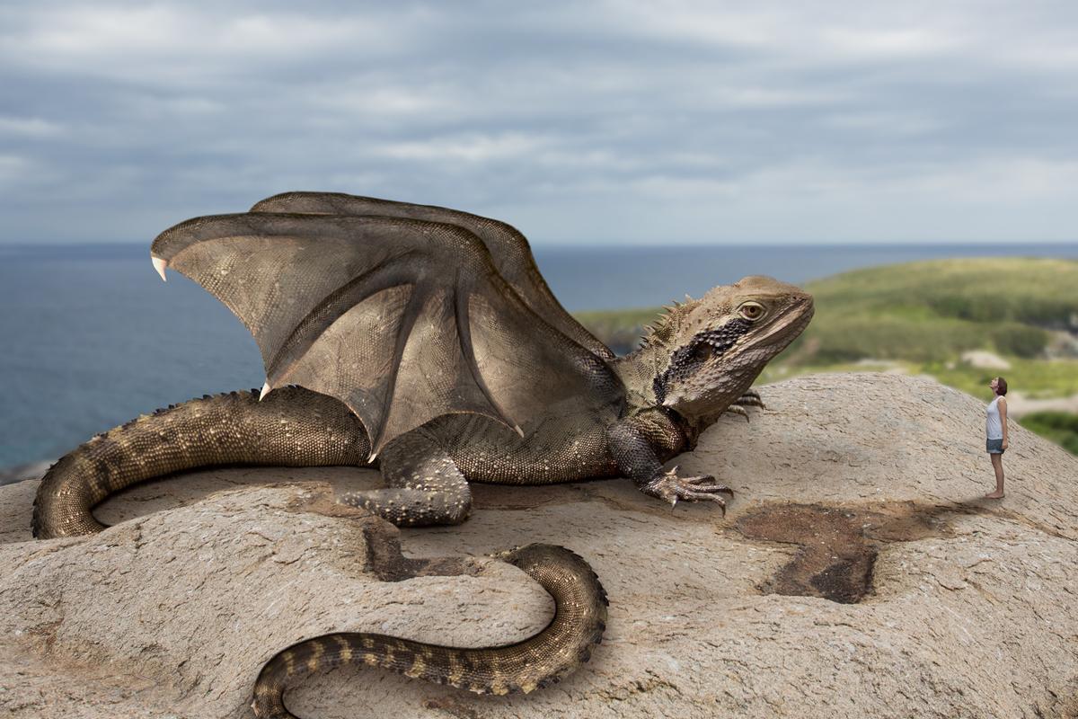 249-dragon-fantasy-photo-manipulation-2