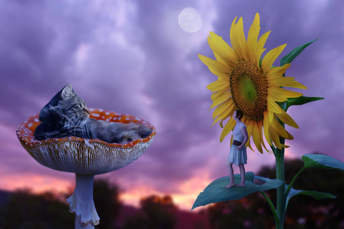 263-wonderland-inspired-photo-manipulation