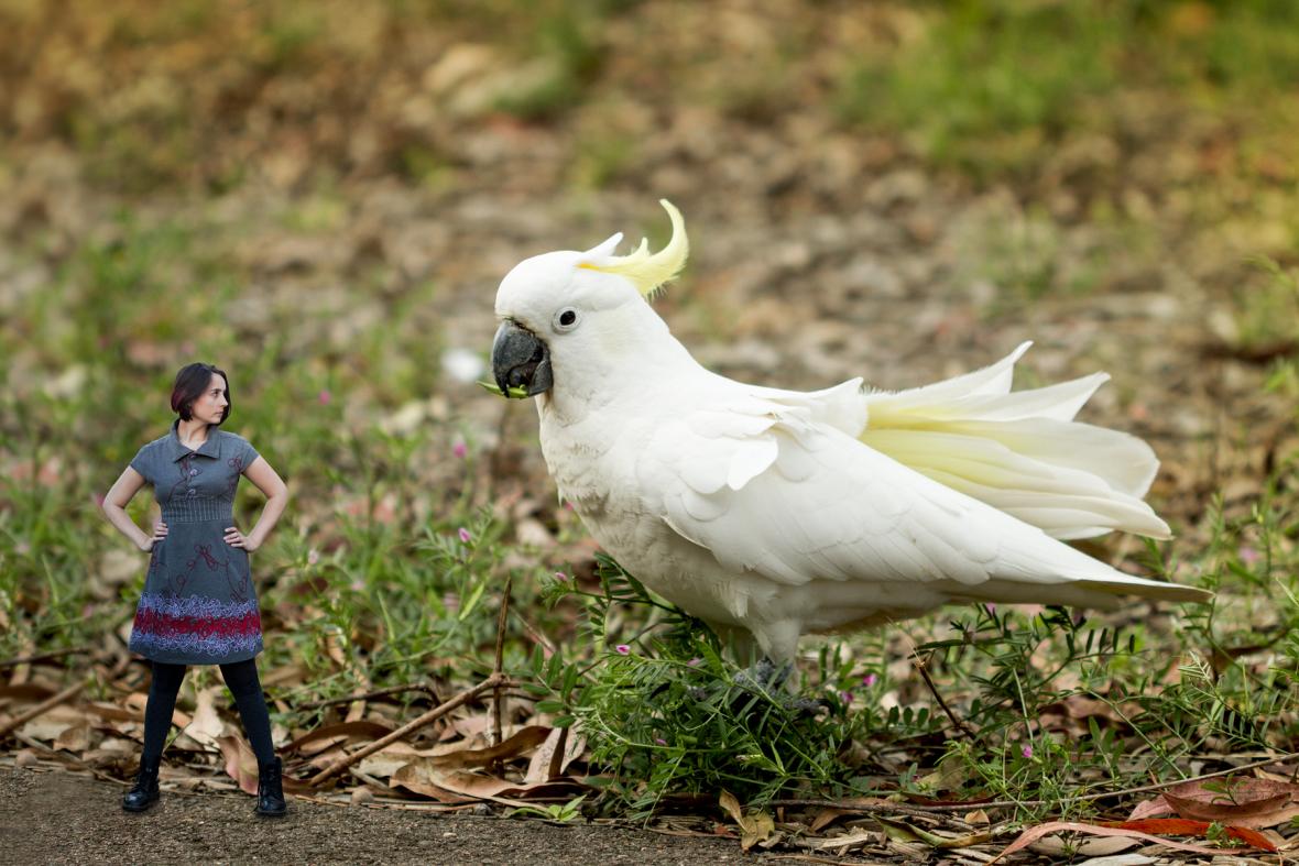 040-cockatoo-tiny-human