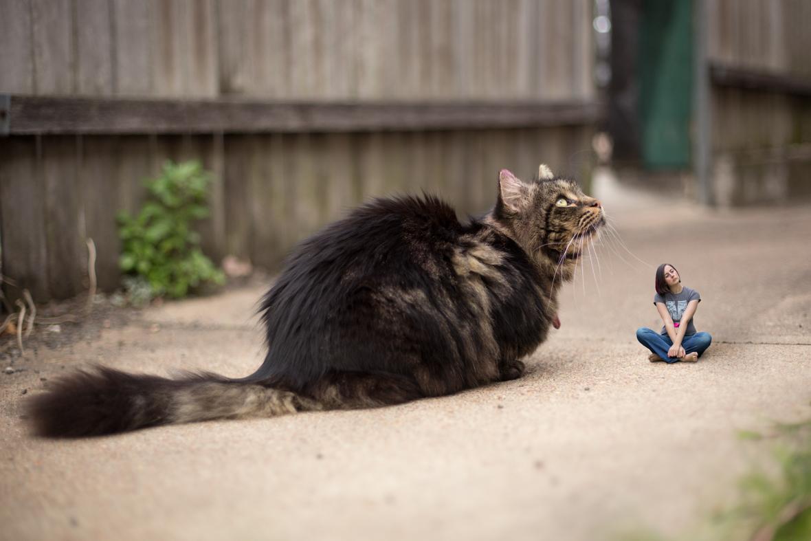 064-giant-cat-tiny-human